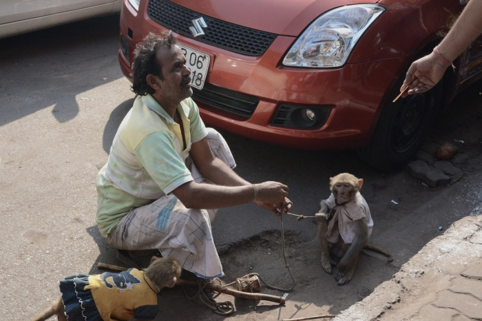 Boy monkey meets girl monkey.They dance to a Bollywood tune.They get paid.Everyone is happy.