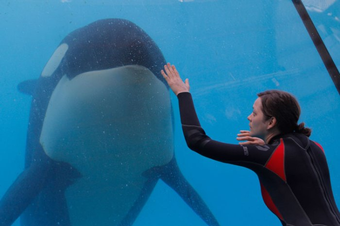 A killer whale lives upto its name