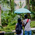 A rainy end to the rainforest zoo!!