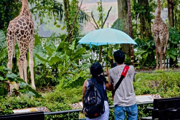 A rainy end to the rainforest zoo!!