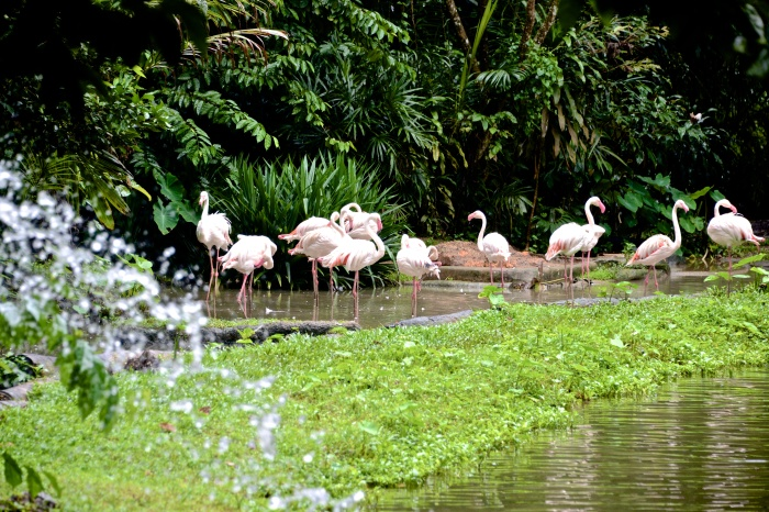 Pink Flamingoes.