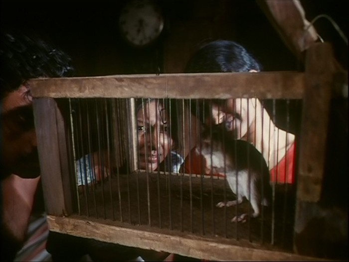 Those outside the cage are as much trapped as the rat inside.